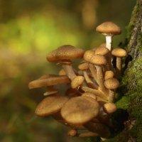 Прогулки по осеннему лесу... :: leonid