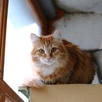 Белка на балконе :: Николай Холопов
