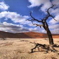 моя самая любимая фотография из Намибии :: Георгий