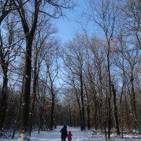 Шагая по зимнему лесу :: Бажина Нина