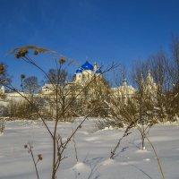 Спрятавшийся за травинкой :: Сергей Цветков