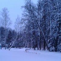 Беседка в зимнем лесу :: Мила