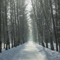 Зимняя аллея :: Виталий