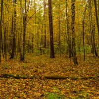 Осенний лес. :: Владимир Лазарев