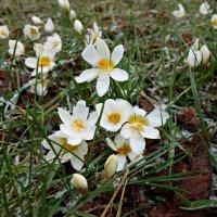 Весна идет!...... :: Galina Dzubina