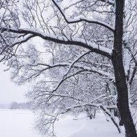 Зимняя сказка ... :: Лариса Корженевская