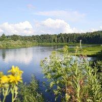 Река Устья :: Светлана Соколова