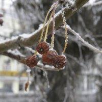 Зима :: Екатерина