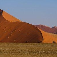 дюны в пустыни Намиб :: Георгий А