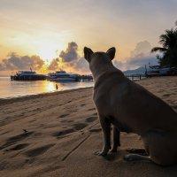 Страж пляжа встречает рассвет :: Oxana G.