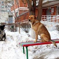 Мать и сын :: Dr. Olver ( ОлегЪ )