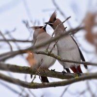 теплые чувства в холода :: linnud