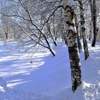 Как не крути, февраль, а быть весне! :: Татьяна Помогалова