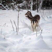 в зимнем лесу :: Татьяна Симонова