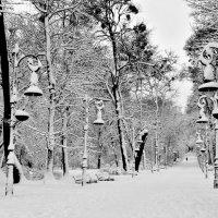 Winter park :: alexander zvir