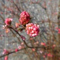 Предчувствие весны :: Nina Yudicheva