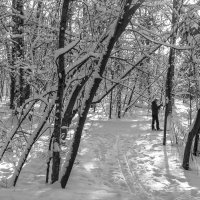 Солнце. Снег. Лес. :: Лариса *