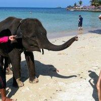 слоненок :: Dmitry i Mary S