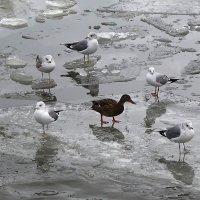 Чайки в ожидании угощения :: Маргарита Батырева