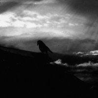 Ворон. :: Вера Катан