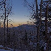 Зимний вечер в лесу. :: Георгий