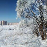 Иней :: Денис Матвеев