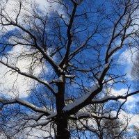 А небо временами уже весеннее :: Андрей Лукьянов