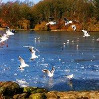 Чайки над синим льдом :: Nina Yudicheva