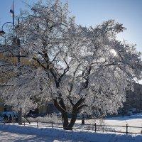 Зима в Питере :: Юрий Бутусов