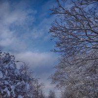 Снежная зима :: Ольга