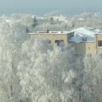 Деревья в снегу :: Георгий Светлов