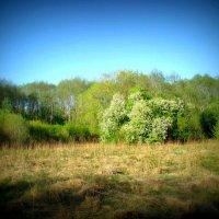 Pavasario laukiant / Spring dreams (Karsakiškis, Lithuania) :: silvestras gaiziunas gaiziunas