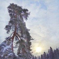 Рассвет :: Наталья Ерёменко