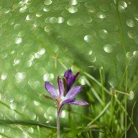 Весна скоро... :: Маргарита Си