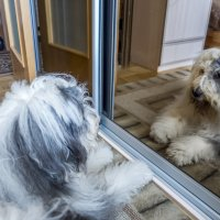 Маня и зеркало :: Лариса Батурова