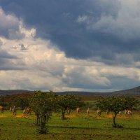пейзаж в зебрах :: svabboy photo