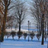 В зимнем парке. :: Paparazzi