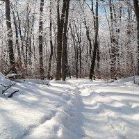 Хороши прогулки в зимнем лесу! :: Андрей Заломленков