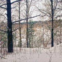 В зимнем лесу :: sorovey Sol