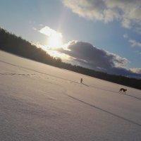 И почему собаки не летают? :: liudmila drake