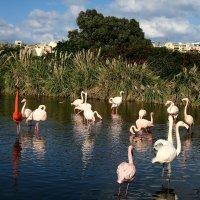 Парк птиц :: Татьяна Нижаде