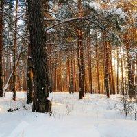Лес зимой :: SaGa