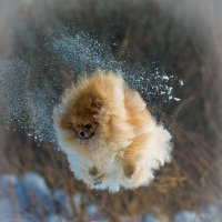 Я Тучка, Тучка, Тучка, я вовсе не медведь... :: Дмитрий .