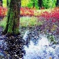 Что такое осень... :: Vadim Zharkov