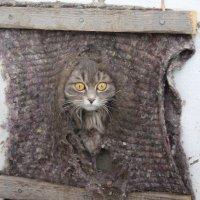 сельские коты :: Alena Legotkina