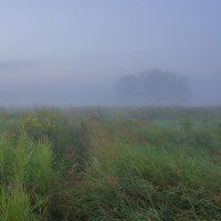 Затерявшись в пойменных туманах... :: Igor Andreev