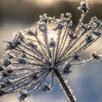 Мороз :: ирина лузгина