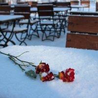 Розы, кафе :: Людмила Самойлова