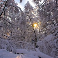 В лесу как в сказке. :: Владимир Безбородов