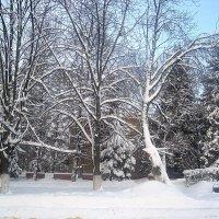 Снежной зимой :: Елена Семигина
